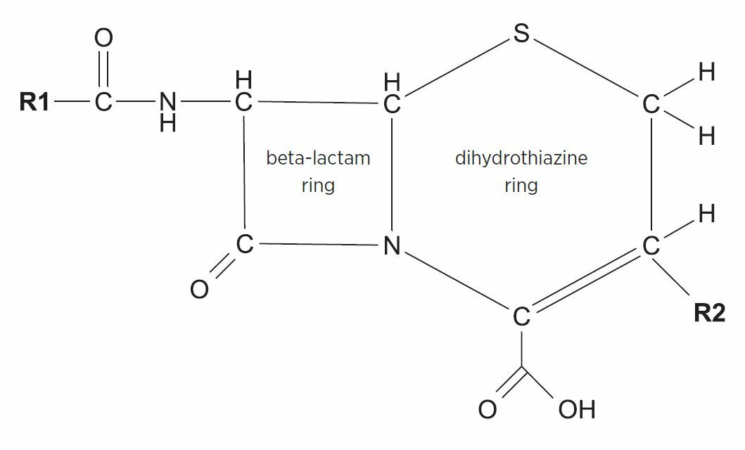 Cephalosporin allergy' label is misleading - NPS MedicineWise