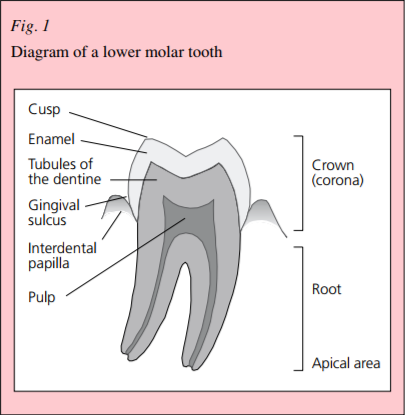 Management of acute dental pain: a practical approach for